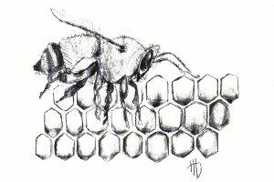 HoneyBeeFinal