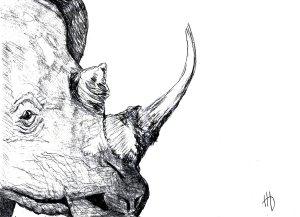 RhinoFinal