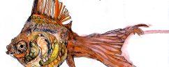 cropped-goldfish.jpg
